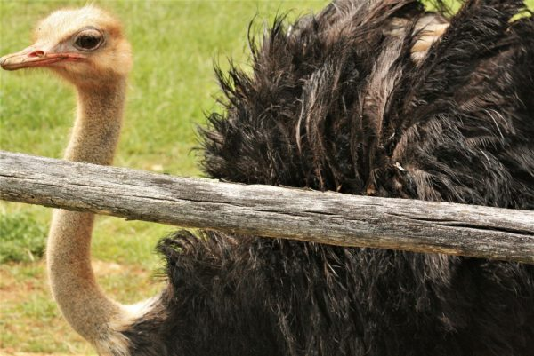 Istria places National park Brijuni safari park animals