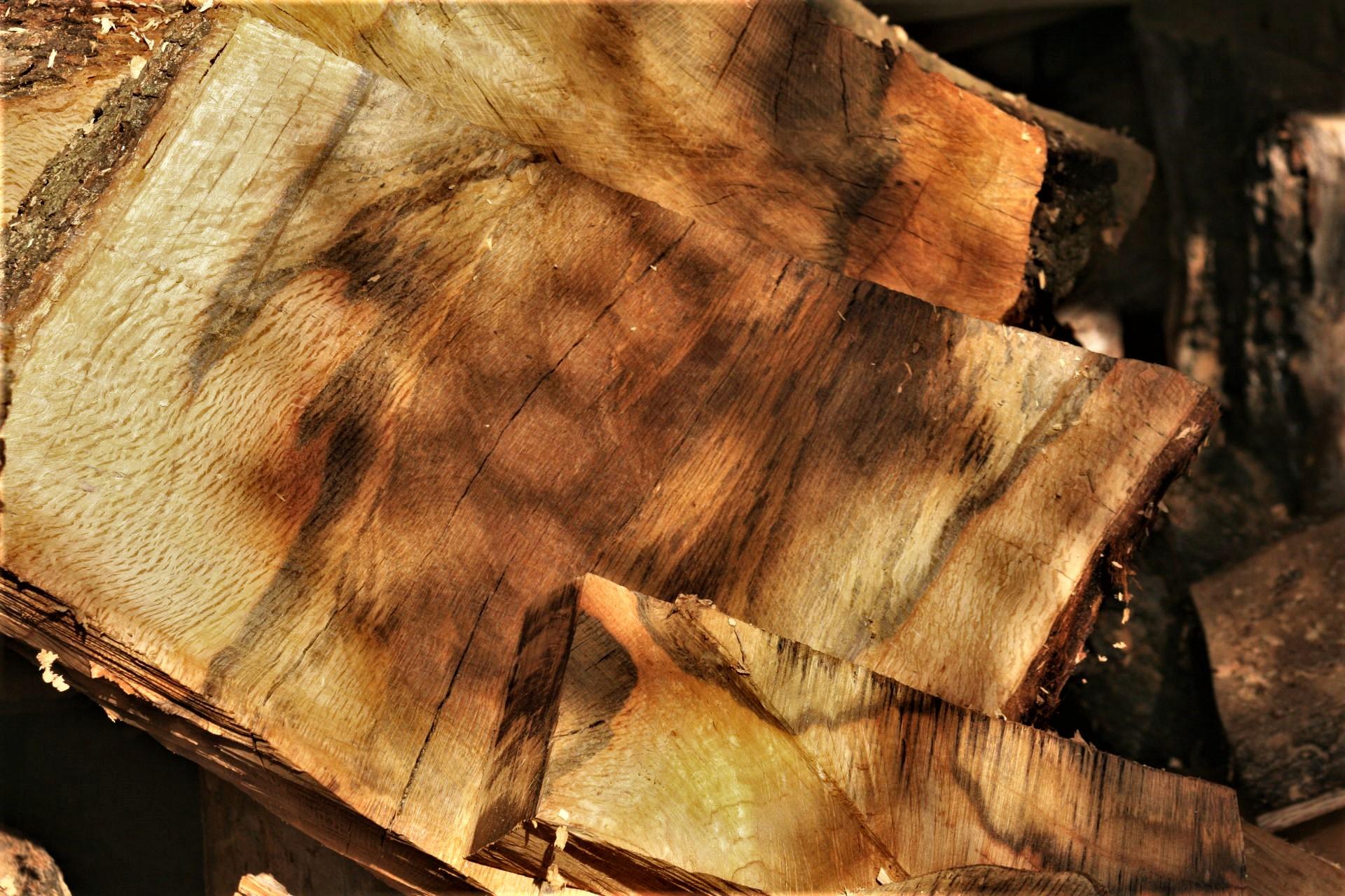Mediterranean holm oak wood characteristics raw material