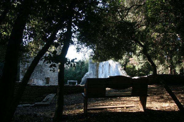 public areas Brijuni national park basilica Istria holm oak wood view