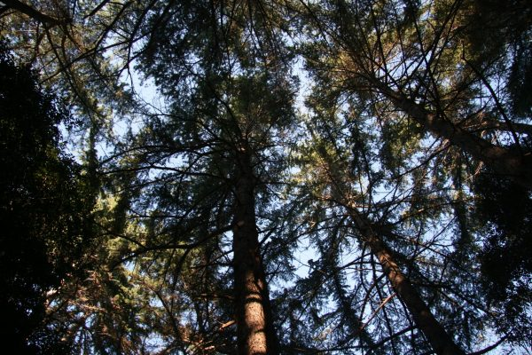 public areas Brijuni national park hammocks view